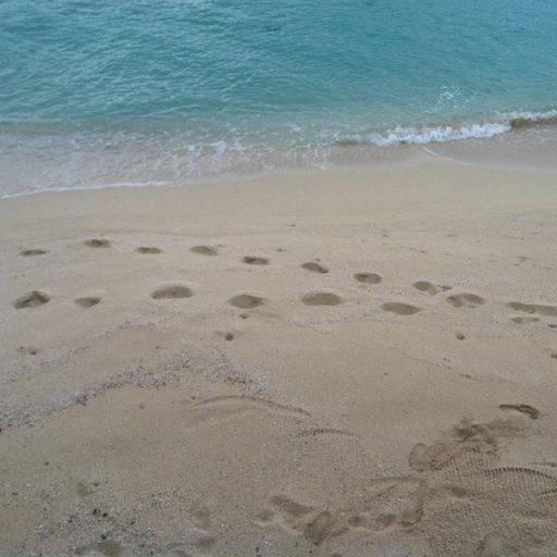 cropped-footprints2.jpg